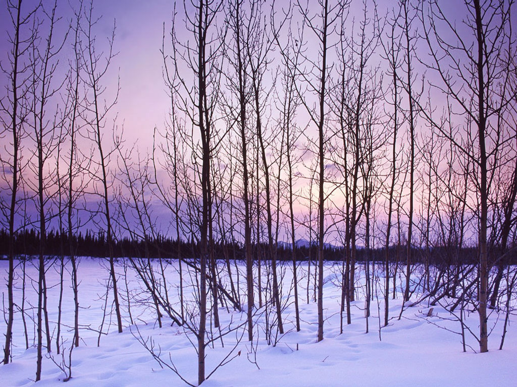 Winter-Trees-winter-509497_1024_768
