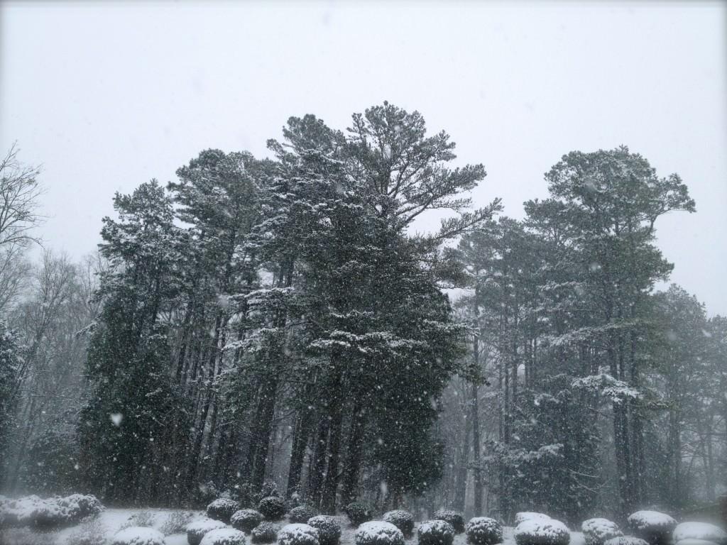 Carolina Snow of 2014 © 2014 Michael Milton
