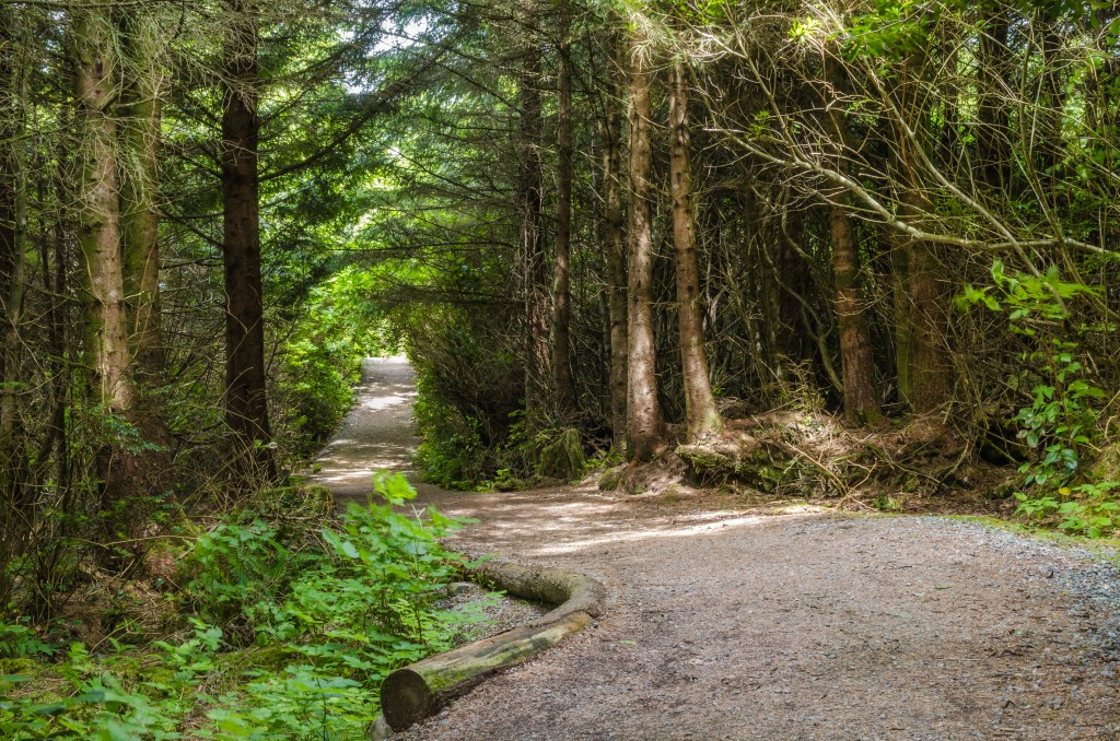 Curving Forest Path