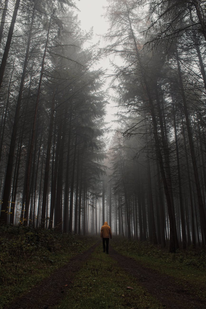 lonely traveler walking in foggy forest